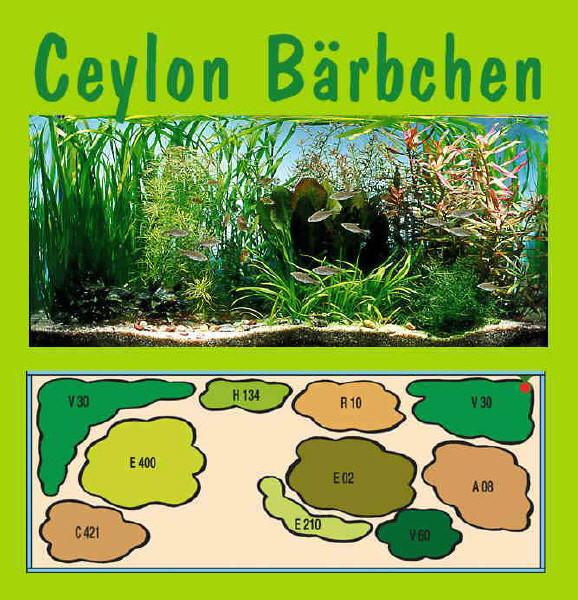 UW Ceylon Bärbchen