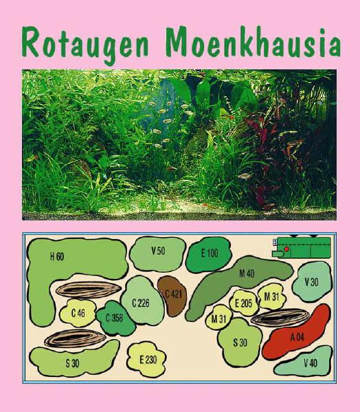 UW Rotaugen Monkhausia