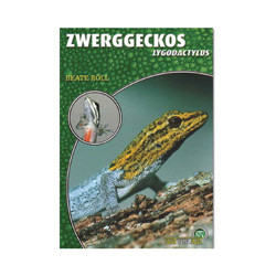 Zwerggecko