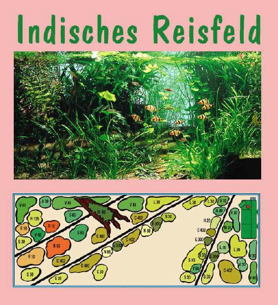 UW Indisches Reisfeld