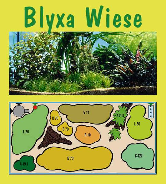 UW Blyxa Wiese