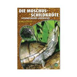 Die Moschussschildkröte