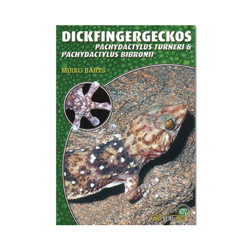 Dickfingergeckos