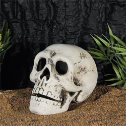 Totenkopf 14x10 cm