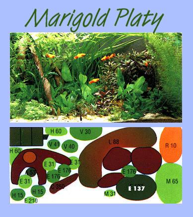 UW Marigold-Platy