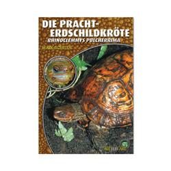 Die Pracht Erdschildkröte