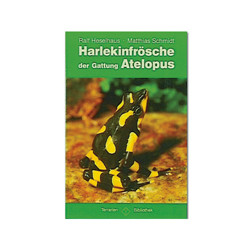 Harlekinfrösche der Gattung Atelopus