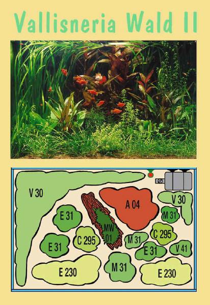 UW Vallisneria Wald II