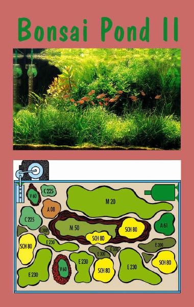 UW Bonsai Pond II