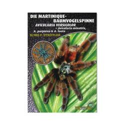 Martinique Baumvogelspinnen