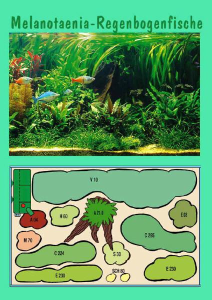 UW Regenbogenfische I
