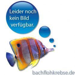 Eheim Filterpatronen für Pickup 200 / 2012 - 2 Stück