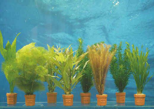 Bundpflanzen im Terrakotta-Topf